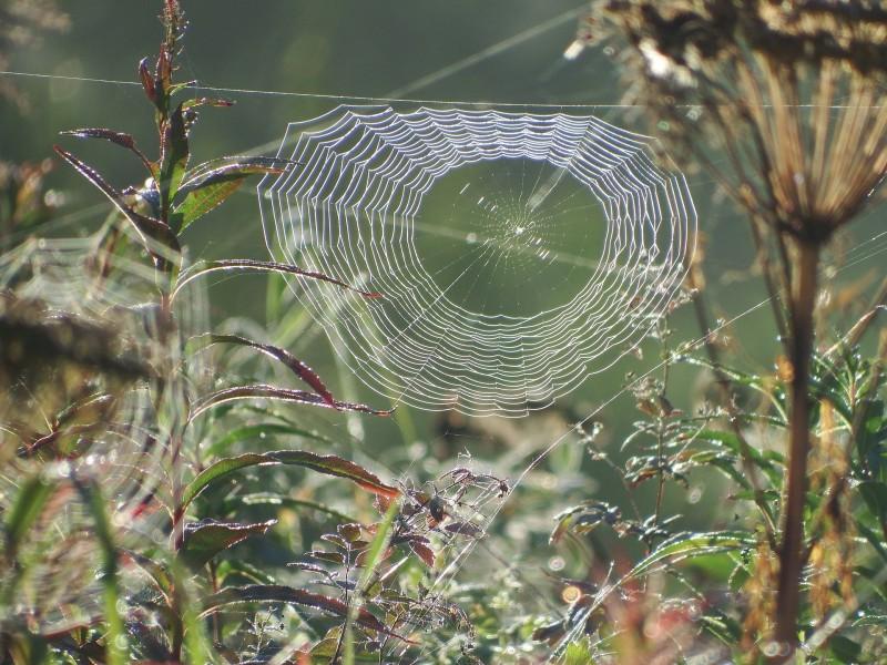 spider-web-2702811_1920