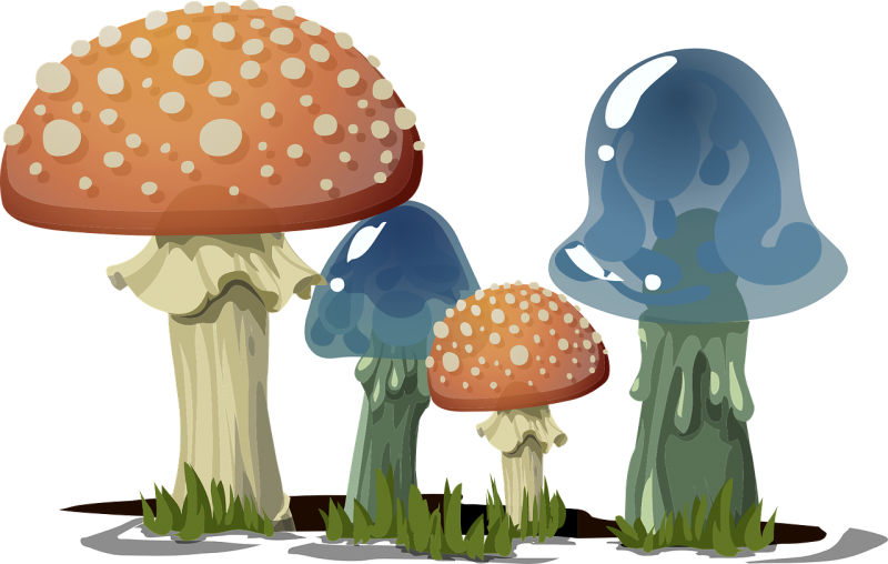 mushrooms-576065_1280